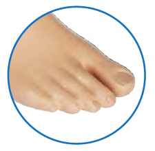 Anatomic cosmetic shell with separated toe.